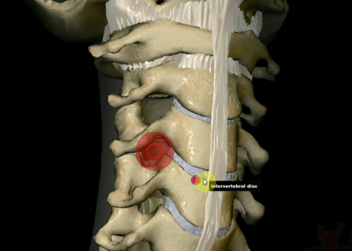 Cervicalgie : une douleur musculaire